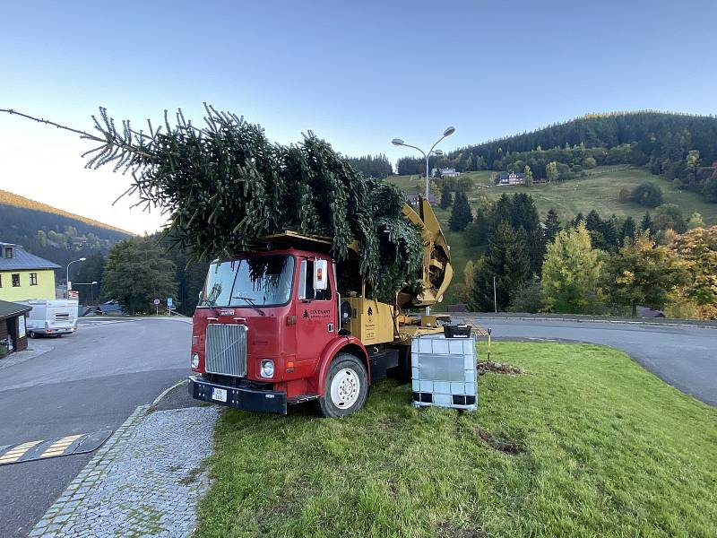 Firma Covenant z Prahy přivezla v pátek do Pece pod Sněžkou vánoční strom. Její šéf šel u té příležitosti šel volit na místní úřad.