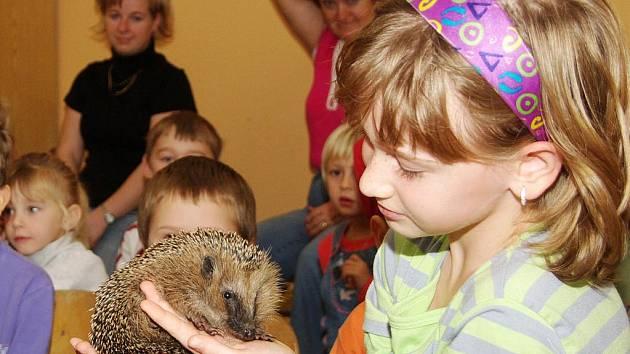 Žáci pěti základních škol  trutnovského regionu se starají o ježky, kteří měli před zimou  pro svou nízkou váhu  minimální šanci přežít ve volné přírodě.