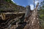 Kus smrkové kůry s chodbičkamií vyžranými kůrovcem v lesích na svazích Špičáku nad Temným Dolem na Trutnovsku (na snímku z 9. srpna 2019), které patří ve východních Krkonoších k nejvíce zasaženým kůrovcem.