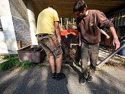 Toulouse a Tomas jsou novými chovnými geprdy kteří v únoru dorazili ze švédské zoo Boras.