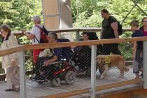 Do korun stromů. Trutnovští vozíčkáři si vyjeli na výlet.