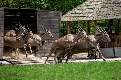 Safari Park Dvůr Králové 2018