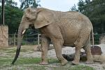 Osvěžující sprchu a melounovou pochoutku dostaly dopřáno dvorské slonice Saly a Umbu při pondělním světovém dni slonů a lvů. Melouny jsou pro slony netradiční pochoutka a kvůli vysoké cukernatosti se s nimi musí hodně šetřit.