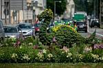 Jednomu z devíti trutnovských kruhových objezdů dominuje květinová výzdoba s drakem, symbolem města.
