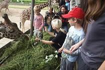 Krmení žiraf si užila i Bára Nesvadbová