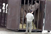 Transport indických nosorožců ze zoo Dvůr Králové do Portugalska