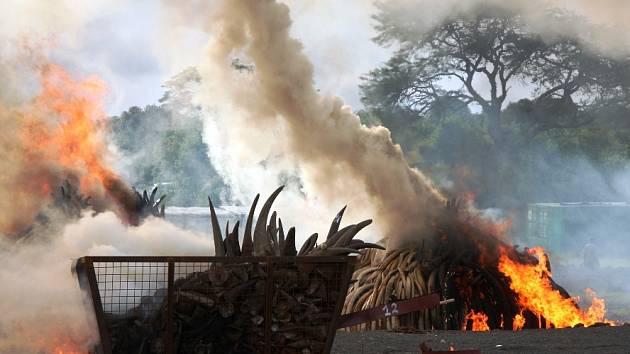 Pálení sloních rohů