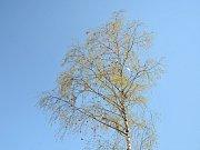V Hostinném mají velikonoční strom.