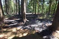 Horko provázejí požáry, a to nejen v lesních porostech.