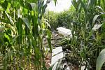 Trosky větroně, který se zřítil u Trutnova, našli záchranáři v kukuřičném poli.