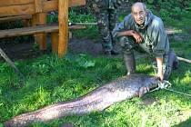ŠŤASTNÝ RYBÁŘ Antonín Hanžl se svým úlovkem na břehu jezera. Sumec, ulovený v jezeře vinařské oblasti Valticko – lednického areálu , měřil 194 cm a vážil 45 kg. Teď už je v Přepeřích.