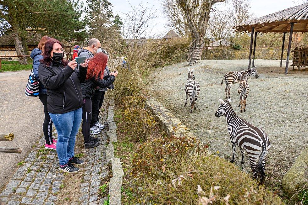 Do Safari Parku Dvůr Králové přišly první den po otevření zoologických zahrad čtyři stovky návštěvníků.