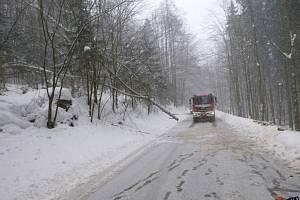 Stromy jsou pod tíhou sněhu stále nebezpečné.