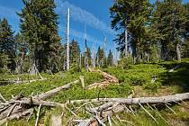 Napadení lesů kůrovcem v Krkonošském národním parku bude mít vliv na urychlení změny druhové skladby lesů ve prospěch listnatých dřevin, převážně buku a jedle.