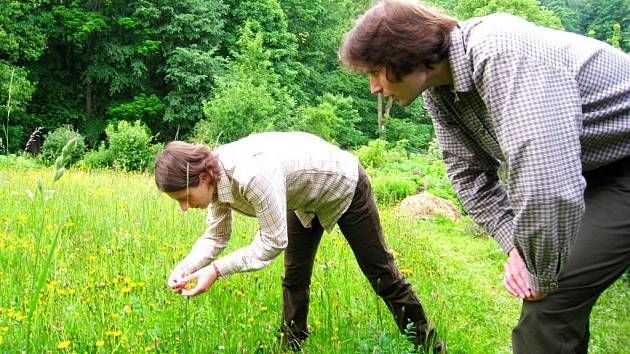 DRUHOVÁ SKLADBA rostlin je bohatá například na louce nad náhonem v Maršově II., loni získala korunku Miss.