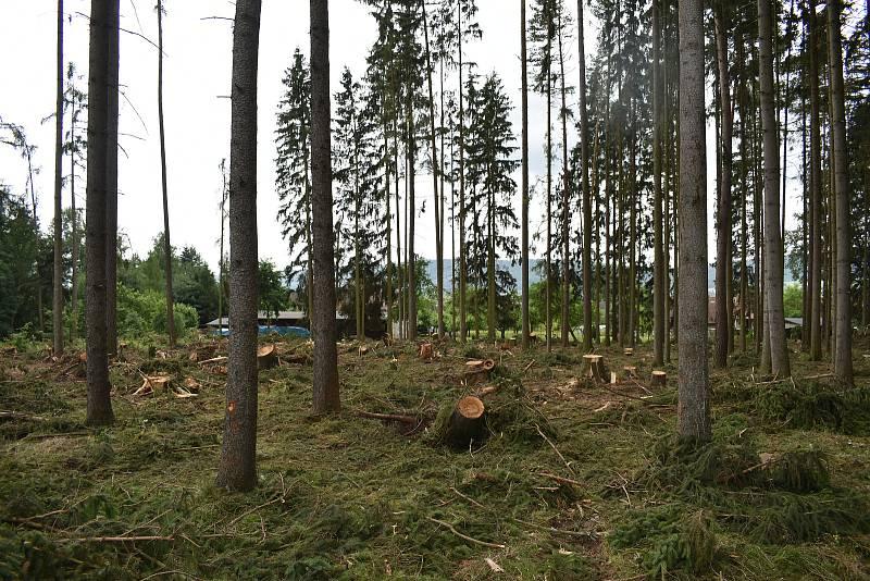 Cesta ke skautskému táboru, kterou se před týdnem museli hasiči doslova prořezat. Z táborů pak evakuovali přes 50 dětí.