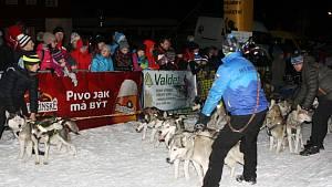 Ledová jízda musherů