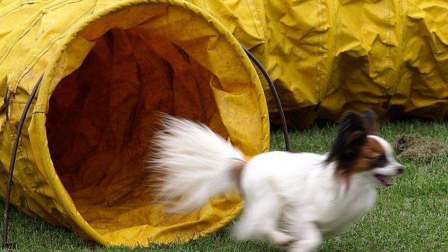 Závody nejmenších psů v agility, Čivava Cup 2009 ve Dvoře Králové