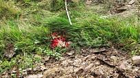 Květnatec Archerův
