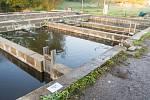 Výlov chovného rybníka Jindra v Havlovicích.