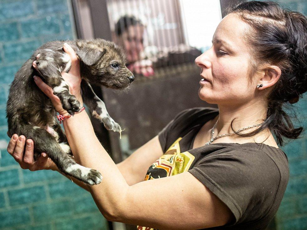 Mláďata zažijí v zoo první české jaro