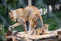 Do Safari Parku Dvůr Králové nad Labem se návštěvníci od pondělí nedostanou.