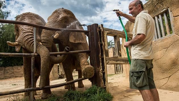 Ošetřovatel Radek Jaroš v zoo ve Dvoře Králové nad Labem sprchuje kvůli horku sloní samice Saly a Umbu.