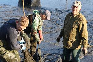 Kapříci vypluli, ve Vrchlabí vypustili po třiceti letech Kačák