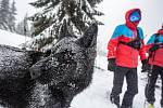 V Krkonoších u Richtrových bud nad Pecí pod Sněžkou trénovali 15. ledna 2019 horští záchranáři vyhledávání v lavinách. Mezinárodního cvičení, které skončí 17. ledna 2019, se účastní asi 40 záchranářů včetně 20 psovodů a jejich psů.