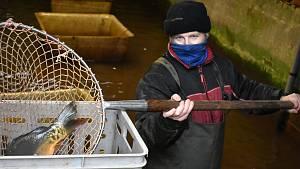 Trutnovští rybáři zahájili vánoční prodej ryb