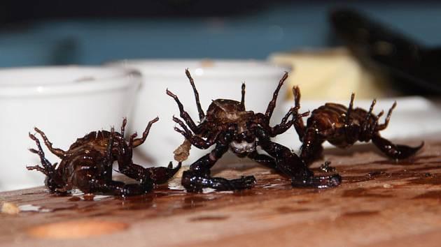 Je libo švába a saranče? Kuchař přivezl hmyzí lahůdky