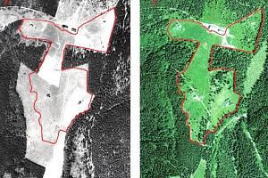 LOKALITA DVORAČKY V ROCE 1953 A 2012. Postup lesa a úbytek louky je zde jasně patrný.