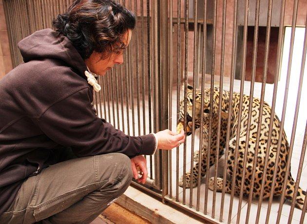 V ZOO denně připravují jídelníčky pro téměř 300 druhů zvířat