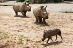 Od pondělí 25. května bude návštěvníkům k dispozici celý areál Safari Parku Dvůr Králové. Poprvé letos vyjedou Safaribusy a Afrika trucky do Afrického a Lvího safari.