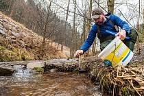 Na jaře je zarybňování horských potoků v Podkrkonoší v plném proudu. Jaroslav Knajfl vysázel plůdky do Babského potoka v Babí u Trutnova.