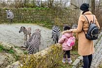 Safari park Dvůr Králové. Ilustrační snímek.