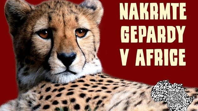 Zoo sbírá žehličky, fény i konvice. Výtěžek věnuje gepardům v Africe