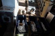 Kosterní pozůstatky někdejších majitelů jilemnického panství Valdštejnů objevili archeologové z Muzea Českého ráje v Turnově. V úterý byly při pietním aktu uloženy na místo nálezu v zahradním domku zámeckého parku.