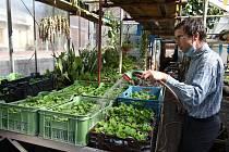 Přípravy na sezonu v bylinkové zahradě Domova sv. Josefa v Žirči jsou v plném proudu.