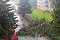 Spadlý strom na ulici ve Dvoře Králové.
