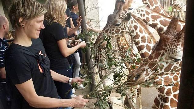 Krmení žiraf hráčky nadchlo
