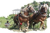 Slavnosti koní, historie a řemesel na Kuksu.