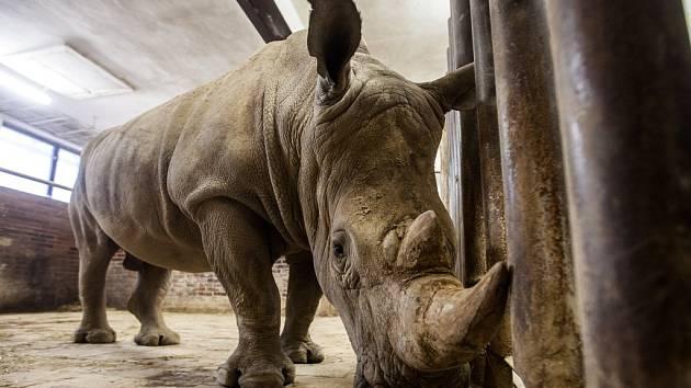 Pamír posílil skupinu nosorožců. Přijel z Belgie