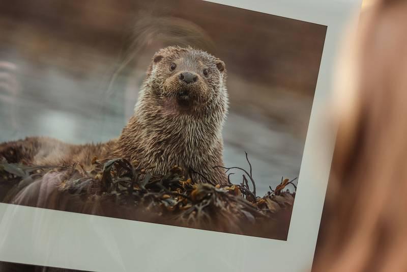 Ve Vrchlabí začala výstava Czech Nature Photo 2020.