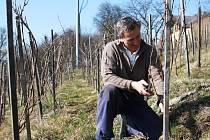JARNÍ PRÁCE vyžaduje i vinohrad. Keříky révy na Kuksu i za suchého počasí vyživuje voda z čedičové skály. Aktuálně provádí Stanislav Rudolfský zimní řez, aby se keříky obrodily.