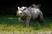 Pivovar dvorského Safari Parku podporuje nosorožce.