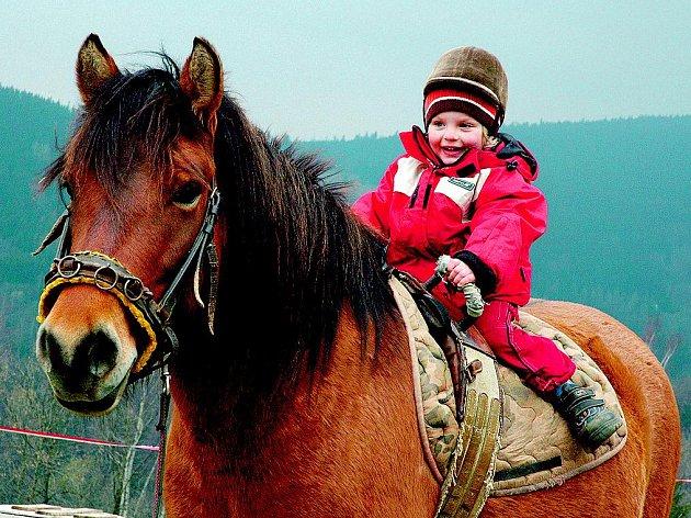 SOUČÁSTÍ VZDĚLÁVACÍHO PROJEKTU na Janově hoře jsou i dva kurzy zaměřené na  přirozenou komunikaci s koňmi.