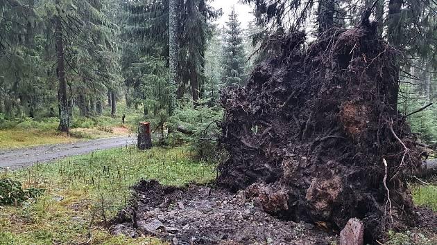 Vyvrácené stromy mezi Richtrovými boudami a Pecí pod Sněžkou.