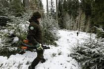 Správa KRNAP a vánoční stromky.