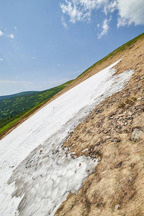 Krkonošská příroda, nafocená 1. července 2019.
